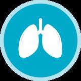 Usos de las células madre: Pulmones