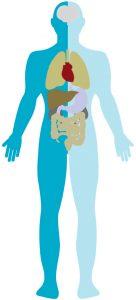 Cuerpo humano transplantes